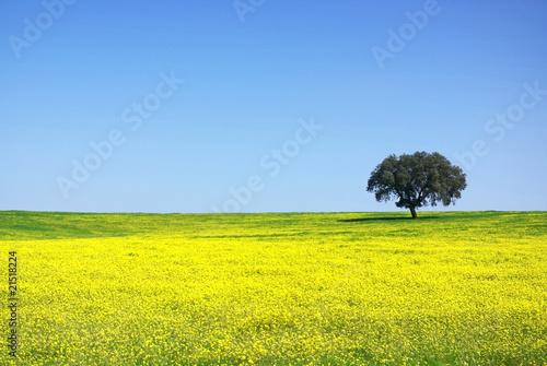 Tree in yellow field.