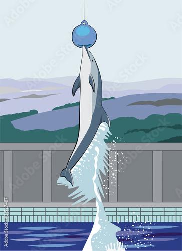 Staande foto Dolfijnen jumping dolphin