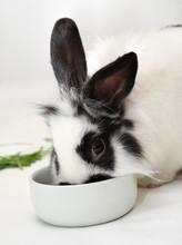 Rabbit Eats Food