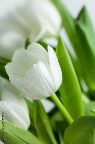Naklejki tulipany wiazanka-bialych-tulipanow