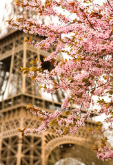 Fototapeta Do sypialni Spring in Paris. Bloomy cherry tree and the Eiffel Tower