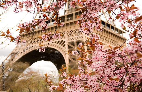 Poster Parijs Spring in Paris. Bloomy cherry tree and the Eiffel Tower