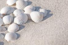 Muscheln, Sand, Sommerurlaub
