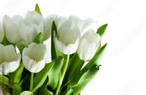 Wall Murals Tulip White Tulips