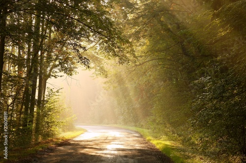 Foto auf Acrylglas Wald im Nebel Country road through autumn forest at sunrise