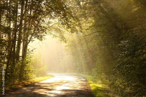 Poster Forets Country road through autumn forest at sunrise