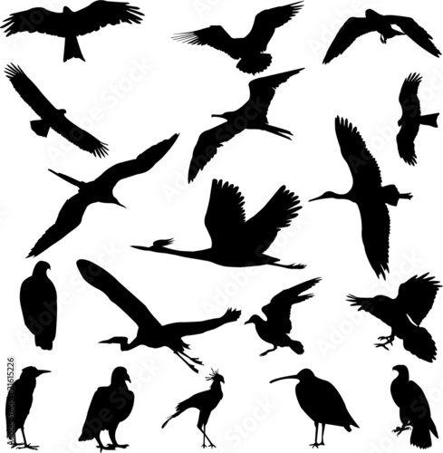 Foto op Canvas Draw birds collection - vector