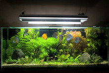 Tropical Freshwater Aquarium With Discus Fish 1