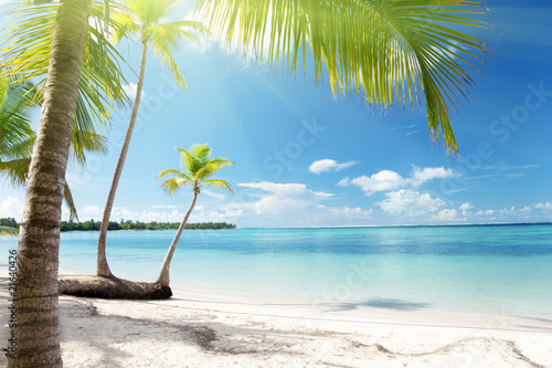 Poster Tropical plage Caribbean sea and coconut palms