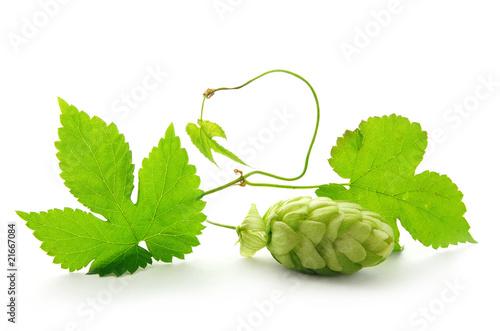 Fotografía  Detail of hop cone with leaves