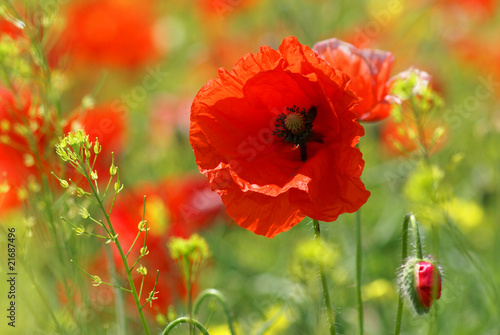 Cadres-photo bureau Poppy poppy