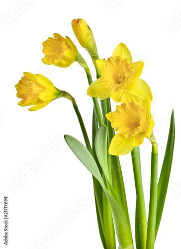 Garden Poster Iris Spring yellow daffodils
