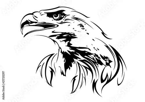Photo  eagle on a white background