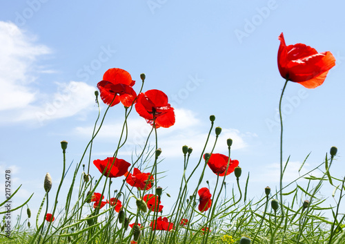 In de dag Poppy poppy red
