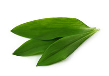 Ramsons Isolated On White Back...