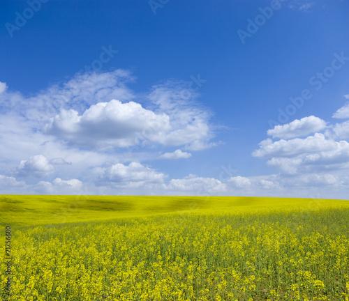 Foto op Plexiglas Weide, Moeras landscape