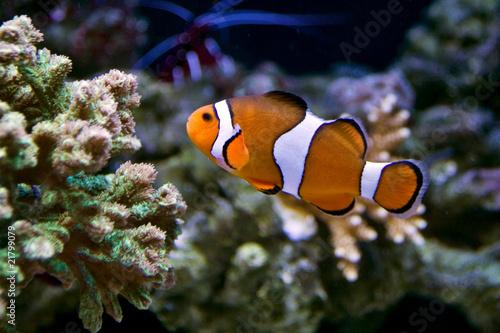 Fotografie, Tablou  Finding Nemo