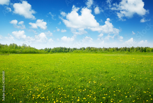 Foto op Plexiglas Weide, Moeras field of spring flowers and perfect sky
