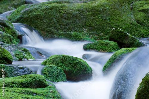 Cuadros en Lienzo Forest brook