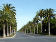 Palm Drive in Stanford