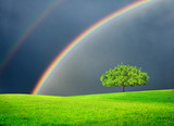 Fototapeta Tęcza - Green field with tree and double rainbow