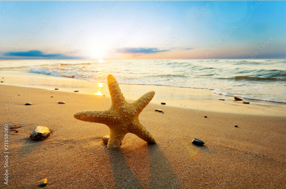 Fototapeta Starfish on the beach