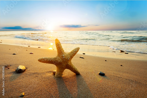 Fototapeten See sonnenuntergang Starfish on the beach