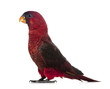 Profile of Cardinal Lory, standing in front of white background