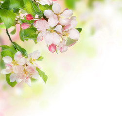 NaklejkaSpring Blossom border
