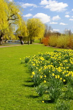 Daffs In The Park 2