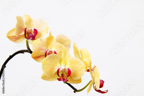 Photo Stands Orchid Orchidee