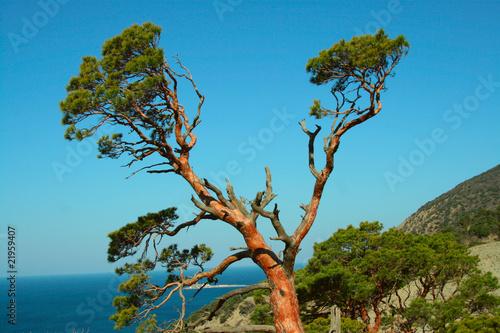 Fototapeta Tree with set of branches against the sea obraz na płótnie