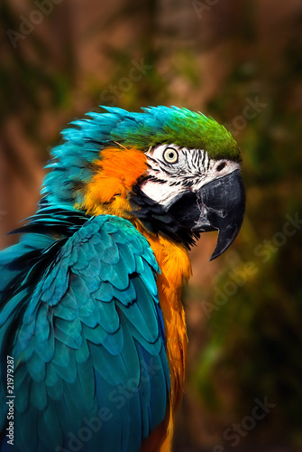 Beautiful Blue and Gold Macaw - Parrot Portrait #21979287