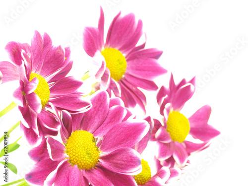 Beautiful pink spring flower