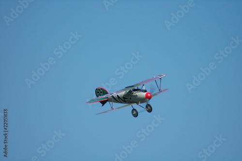 Fotografie, Obraz  Albatros_2