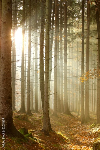Papiers peints Foret brouillard Magic sun rays through the trees in the autumnal woods