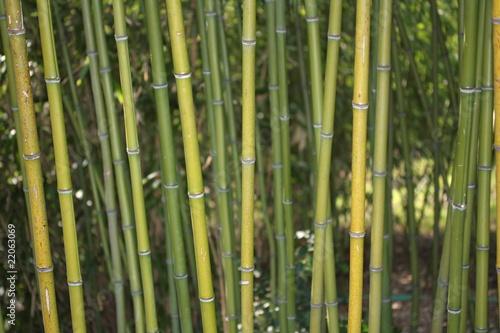 Foto op Plexiglas Groene Bambus