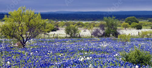 Foto op Aluminium Texas Field of Bluebonnets as a storm rolls in over the distant hills.