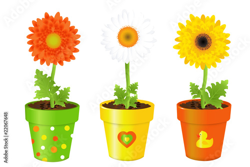 Daisies In Pots With Pictures Poster