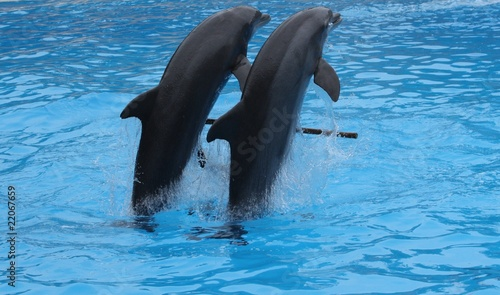 Staande foto Dolfijnen Dolphins performing in Loro park