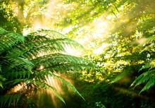 Morning Sun In A Misty Rainfor...