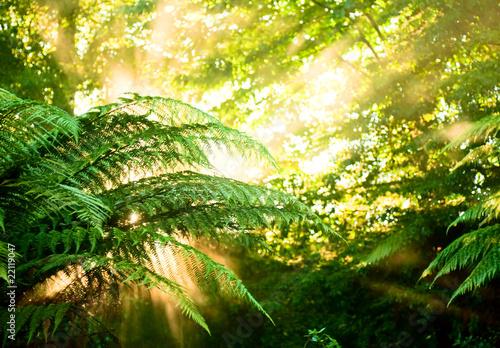 poranne-slonce-w-mglistym-lesie-deszczowym