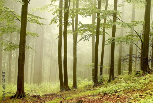 Fotobehang Bos in mist Misty autumn woods