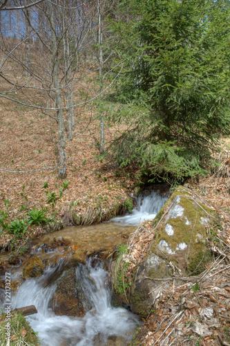 Fototapeten Forest river creek