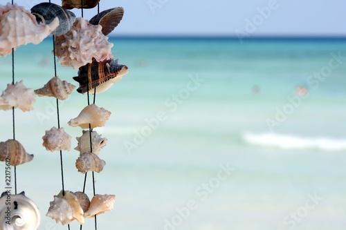 Photo sur Toile Bleu clair coquillages dans le vent sur la plage