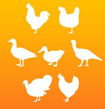 Vector Silhouettes Birds