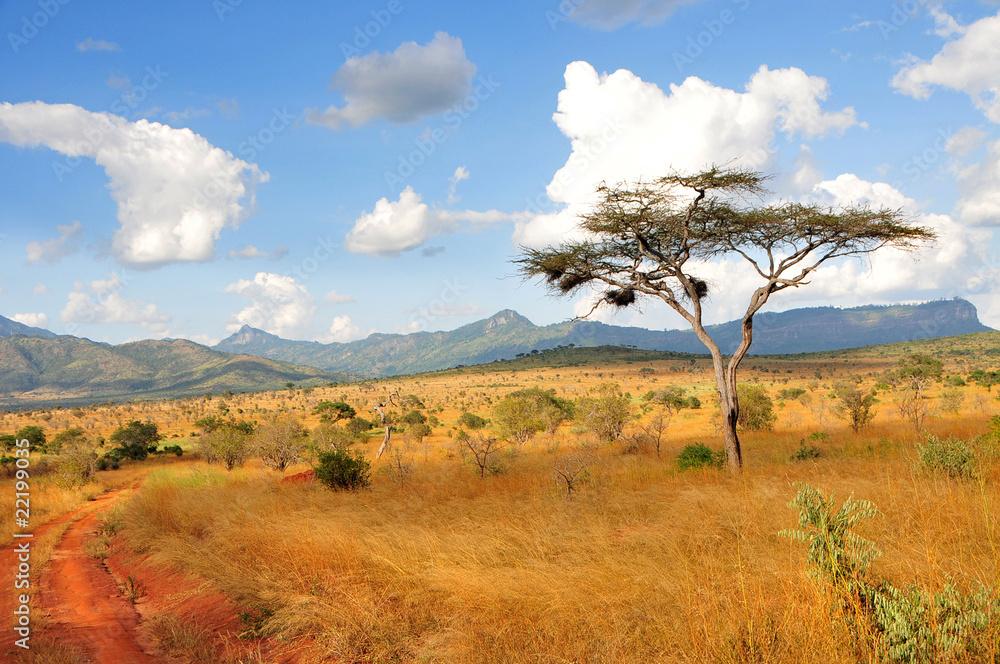 Fototapety, obrazy: Akazie in Taita Hills