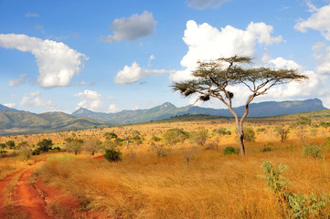 Fototapeta Akazie in Taita Hills