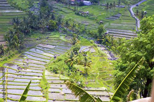 Foto op Aluminium Indonesië rice terraces, Bali, Indonesia