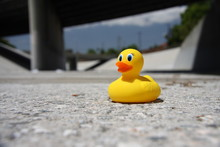 Rubber Ducky In The Los Angeles River 2